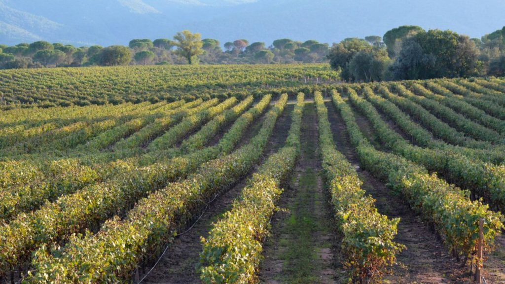 domaine viticole provence